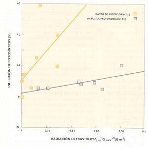 FIG I : Relación entre la inhibición de la fotosíntesis y la cantidad de la radiación ultravioleta.