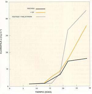 Fig II : Relación entre la coantiad de clorofila en algas y su exposición a la radiación ultravioleta.