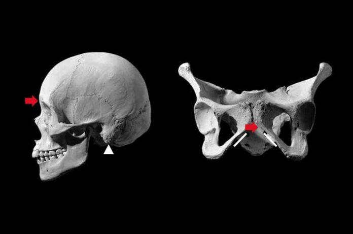 Colecciones documentadas de esqueletos: ¿para qué sirven?