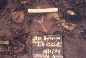 Fig 2. En la fotografía se pueda apreciar la densa concentración de restos en el sitio La Olla 1