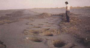 Fig 1. Sitio paleoicnológico de Pehuencó, rastrilladas de grandes mamíferos del Pleistoceno.