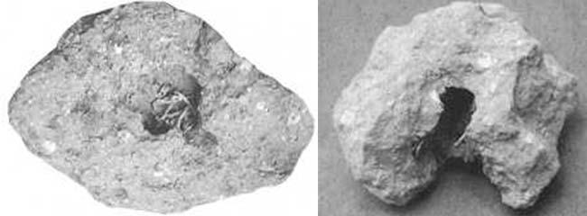 El hallazgo de restos fósiles de bolos de regurgitación de lechuza en Punta Hermengo-Miramar, permitió efectuar una reconstrucción paleoclimática a través de la identificación de los numerosos huesos de mamiferos que contenían.