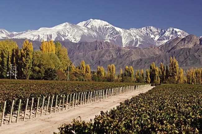 Cultivos bajo riego en Mendoza, al pie de los Andes centrales. Al fondo, nevado, el Cordón del Plata.