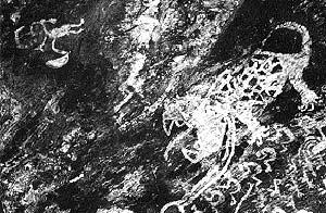 Conjunto de figuras pintadas en color blanco en la Cueva de la Calendaria, Catamarca. Se observa la imagen de un jaguar, con sus fauces abiertas, su lengua afuera y un largo collar al cuello. Abajo, una hilera de figuras humanas, que conforman una escena de baile, y un grupo de suris. En la parte superior izquierda, un pequeño sujeto con tocado y objetos en sus manos.