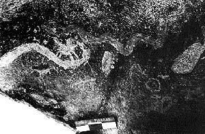Pinturas blancas de serpientes y otros animales, abrigo Campo de la s Piedras, Catamarca.