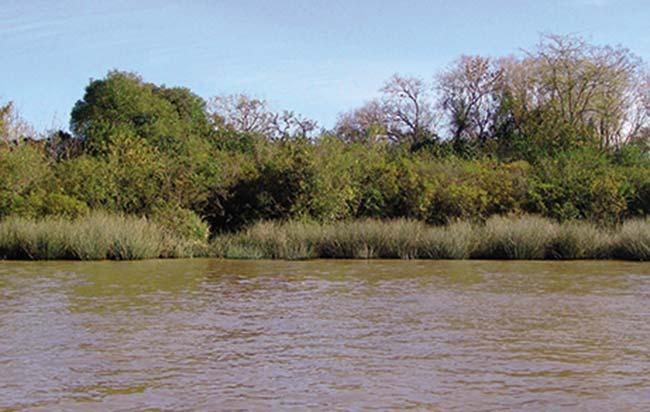 Típico color de los ríos y arroyos del delta debido al predominio de pequeñas partículas limo-arcillosas que arrastra el agua. También lleva una fracción menor de partículas de arena, que son más grandes.