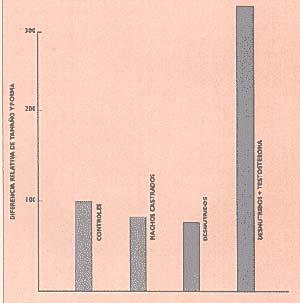 Figura 4 Efecto de la administración de testosterona en machos sobre el dimorfismo craneano sexual en ratas desnutridas