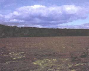 Vista de un turbal virgen en el centro de la provincia de Tierra del Fuego