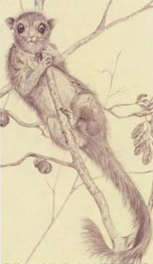 Fig. 8. Una reconstrucción del probable aspecto que presentaban los groebéridos en vida.