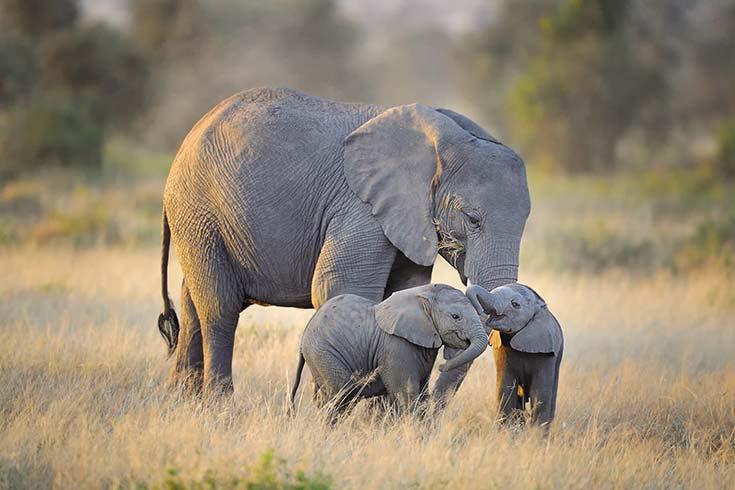 La paradoja de Peto y el cáncer en elefantes