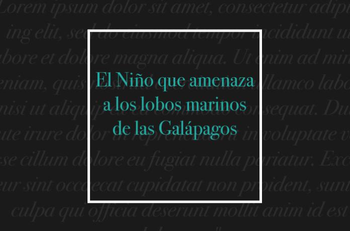 El Niño que amenaza a los lobos marinos de las Galápagos