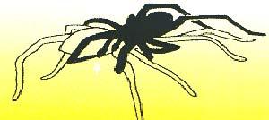 Figura 3. Dibujo esquemático de una cópula coespecífica. El macho en negro se monta sobre la hembra y queda apoyado en ella. Uno de los palpos del macho (el apéndice que indica la flecha ubicada en la parte anterior del animal) se estira hacia el epigino de la hembra (ovario) en su abdomen.