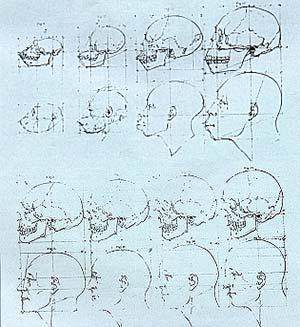 Fig. 4. Ilustracion de la obra de Camper, 1791