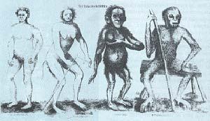 Fig. 2 Especies de antropomorfos segun Christianus Emmanuel Hoppius: Troglodita, Lucifer, Satiro y Pigmeo.  Ilustracion de su Tesis Anthropomorpha, Uppsala, 1760. (Artis Bibliotheek, Amsterdam)