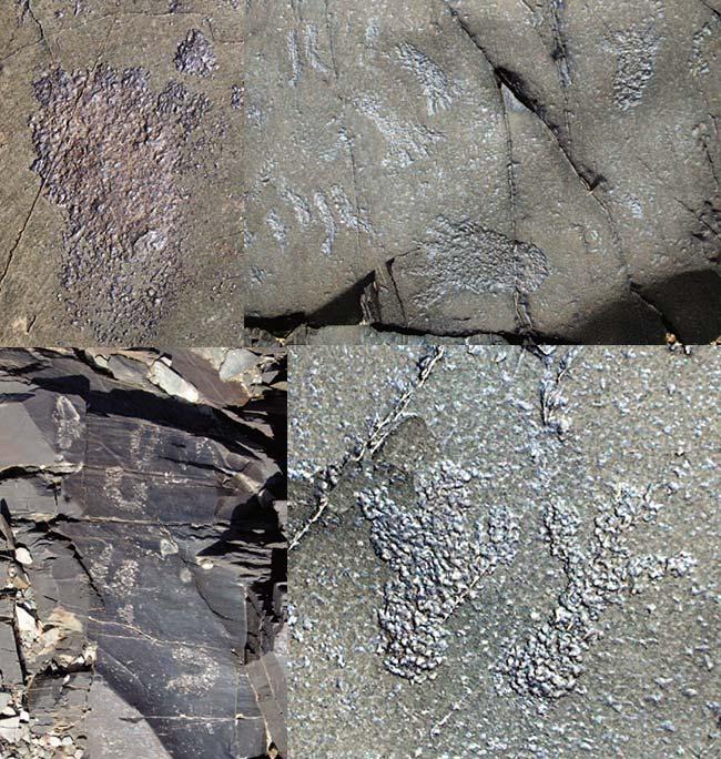 Arriba, izquierda: huella de pie humano con cuatro dedos cerrados pegados a la planta y el pulgar separado. Arriba, derecha: cuatro huellas humanas orientadas en distintas direcciones y varios rastros de ungulados con forma de líneas paralelas. Abajo, izquierda: huellas de ungulados en forma de U. Abajo, derecha: una impronta de pie derecho junto a dos huellas de las extremidades traseras de un chinchillón o vizcachón de la sierra.