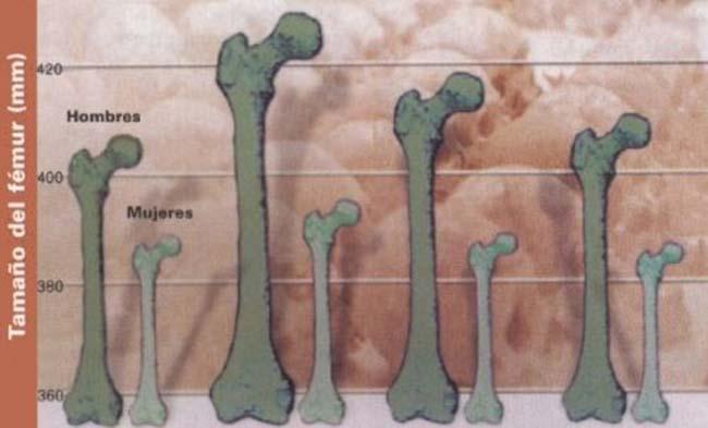 Tamaño medio del fémur en la población de San Pedro de Atacama en los cuatro períodos estudiados. El tamaño del fémur tiene gran correlación con la estatura del individuo, razón por la cual fue utilizado para estimar la altura.