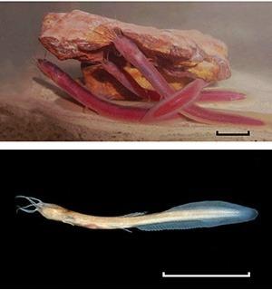 Phreatobius cisternarum