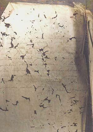 Insectos en Bibliotecas y Archivos