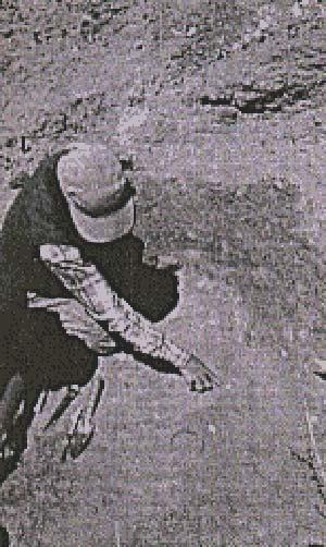 Figura 1. un paleontólogo en el campo. El pequeño punto blanco señala la presencia de un mamífero fósil, que debe ser extraído, trasportado al laboratorio y sometido a un largo y paciente trabajo para liberarlo de la roca en que se encuentra atrapado. Usualmente se requiere cerca de un año antes de que el ejemplar esté listo para su estudio. Encontrar restos tan diminutos requiere pericia y ojos bien entrenados.