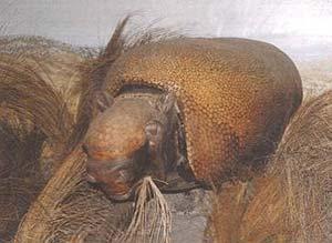 Sclerocalyptus (reconstrucción) Museo de La Plata