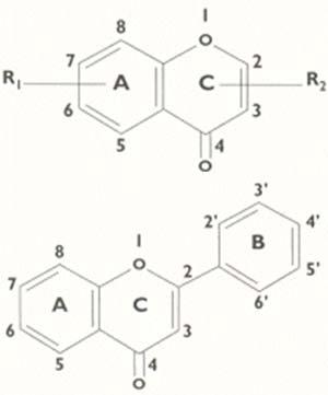 Fig 3 (Arriba) Estructura de la benzopirona.El anillo A es un benceno, el heterociclo asociado C es el denominado pirona. R1 y R2 representan a una variedad de substituyentes quimicos que pueden ubicarse en cualquiera de las posiciones indicadas por los números, lo que da origen a la gran variedad (más de 5000) de flavonoides conocidos. Fig 4 (Abajo) Estructura de la flavona. Los flavonoides activos mencionados en este artículo derivan del núcleo flavona que, a su vez, se origina de la benzopirona cuando, en la posición 2, se introduce un anillo bencénico. La secuencia A.C.B, usada para designar a los anillos, responde a una regla de nomenclatura orgánica que da preferencias a los anillos bencénicos.