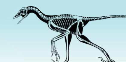 microsaurios