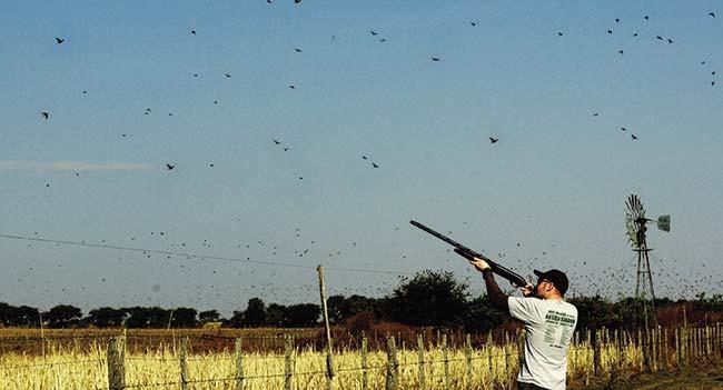Un recuso que moviliza turismo internacional: la caza de torcazas en Córdoba