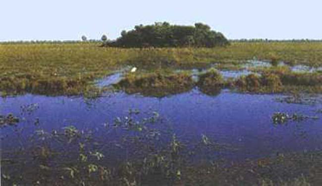 """Fig 3. """"Capao"""" situado en el medio del campo hacia el final de la temporada de inundación, en la estancia Bodoquena."""