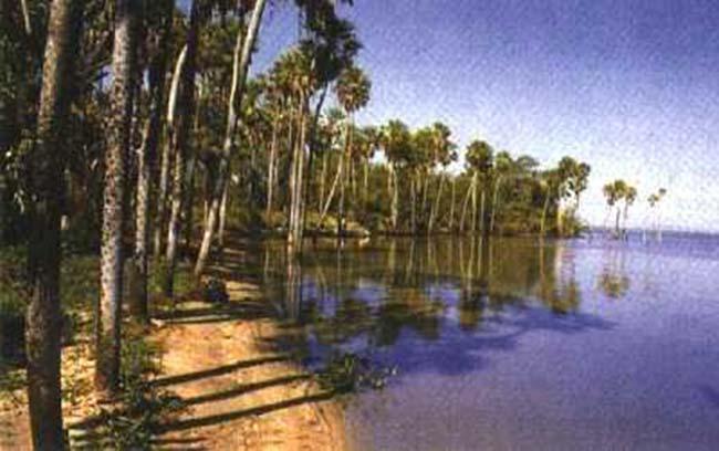 """Fig 4. Palmeras de """"caranda"""" y montículo en el borde de la laguna de Jacadigo."""