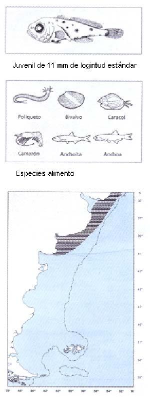 peces5