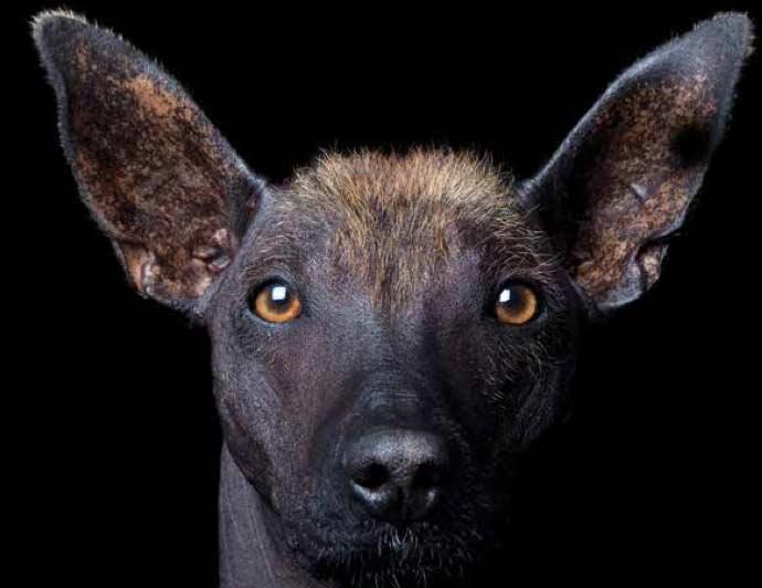 Una historia de perros. Mitos y certezas sobre su origen y dispersión en América