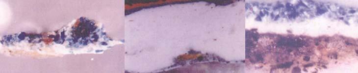Izq Azurita Estratigrafía de una muestra tomada de la Coronación de la Virgen por la Trinidad de la iglesia de Yavi, Jujuy. Corte transversal visto al microscopio con 250 aumentos. Medio Indigo Estratigrafía de una muestra tomada de un Angel Militar de la iglesia de Uquia, Jujuy. Corte transversal visto al microscopio con 125 aumentos. Der  Smalte Estratigrafía de una muestra tomada de la Virgen del Rosario de Pomata de la iglesia de Casabindo, Jujuy. Corte transversal visto al microscopio con 125 aumentos