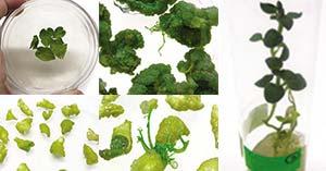 plantas como biorreactores