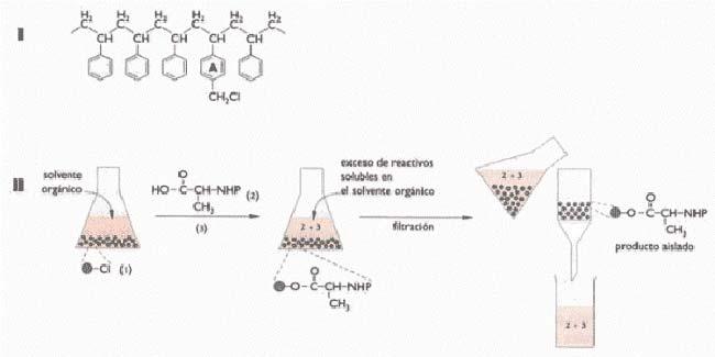 """Fig. 3. En la síntesis en fase sólida, el producto de la reaccción queda unido a una resina insoluble. En I se esquematiza una de tales resinas: el poliestireno polímero resultante de la asociación de numerosas moléculas de estireno (nótese la estructura repetitiva característica de un polímero). La resina esquematizada en I posee además, en intervalos, un grupo clorometilo (CH2CI) unido a la parte del polímero con estructura de anillo. Es aquí donde tiene lugar la unión de la substancia que se fijará a la resina para luego reaccionar con otras. La estructura I se llama resina de Merrifield, porque fue desarrollada por Bruce Merrifield, de la Universidad Rockfeller, como parte de la técnica de síntesis de péptidos en la fase sólida que le valió el premio Nobel en 1984. En II la resina está inmersa en un solvente orgánico y el grupo fijador (1) reacciona con el carboxilo del aminoácido alanina (2), cuyo grupo animo está """"protegido"""", esto es, impedido de reaccionar por asociación con un compuesto químico, cuyo grupo amino está """"protegido"""" , esto es, impedido de reaccionar por asociación con un compuesto químico, lo que está indicado en la figura porque el grupo amino está representado como -NHP en lugar de -NH2. La asociación del aminoácido con la resina se realiza con la ayuda de un reactivo acoplante (3). Al completarse la reacción, parte de la alanina queda unida a la resina y el resto, junto con el reactivo acoplante, permanece en el solvente.  Estos se separan fácilmente, porque la resina queda retenida en un filtro y las substancias disueltas se eliminan al lavarlo. En la síntesis en fase sólida de péptidos, procedimiento se repite para ir agregando uno a uno los aminoácidos del péptido."""