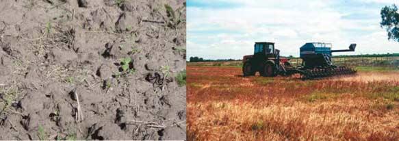 Sojización y productividad de los suelos pampeanos