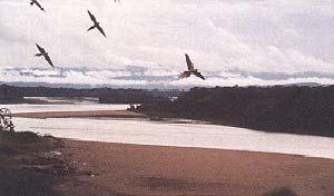 El Rio Tambopata nace en el altiplano peruano-boliviano y atraviesa el bosque de neblina, un ecosistema cubierto permanentemente por nubes.