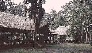 El centro de investigaciones de Tambopata cumple un cometido activo en el estudio de las poblaciones de aves de la región.
