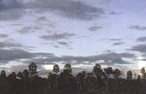 Palmares y sabanas son ecosistemas típicos de las regiones aledañas a la reserva.