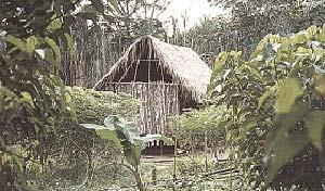 Maloca, típica vivienda ese'eja en la  comunidad nativa de infierno