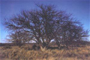 Ambiente de caldenes en el Parque Nacional Lihuá-Calel. Foto: Jorge H. Morello