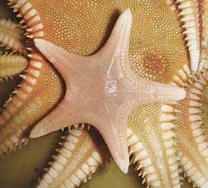 Vida en los fondos profundos del mar